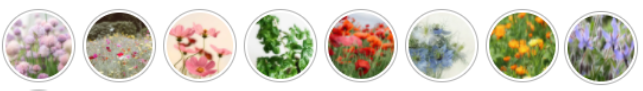 Choix des fleurs